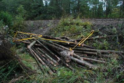 Cmentarz choleryczny w Iwoniczu – prace ruszyły